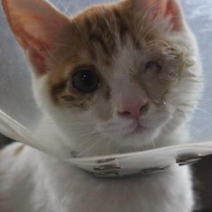 保護子猫・目の手術しました