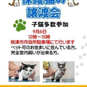9月6日 焼津市役所駐車場で譲渡会を行います