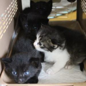 4兄妹仔猫&母猫保護