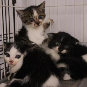 仔猫3匹保護
