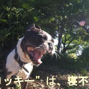 愛犬散歩:運動量が、多くて・活発で、、ちょいと大変 ( ̄▽ ̄;)
