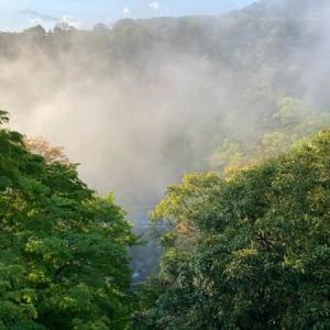 店内からの景色のおすすめ時間帯 箱根 自然薯の森 山薬