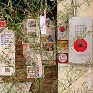 本日7月7日はイカ素麺を無料にてご提供♪箱根 自然薯の森 山薬
