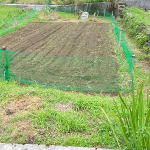 圃場2番耕起~エシャレット準備