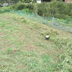 圃場8番草刈