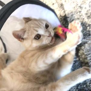 猫の爪研ぎ、横に置くか?縦に置くか?