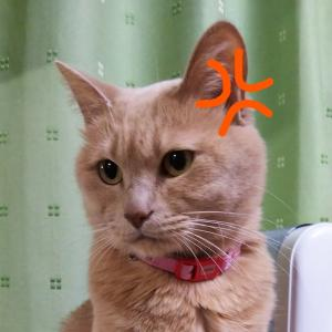 はたしてニンニクを食べた後のおならは猫にとって有害なのか?