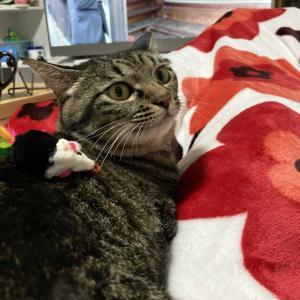 ネズミのおもちゃと一緒❤