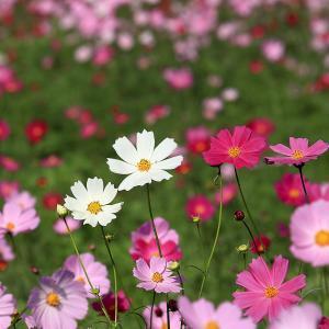2020.10 花の丘公園1