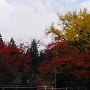 杉山・白石神社の紅葉