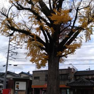 山田の大銀杏