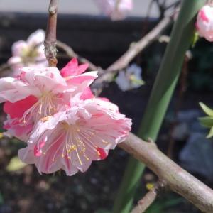 のどかな春の日