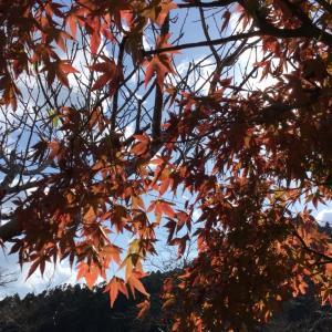 秋がきた庭も紅葉
