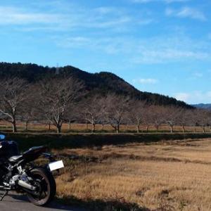 桜並木の冬景色をバイクで!