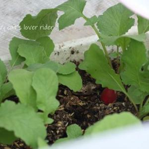 ウチの小さな小さな家庭菜園♬