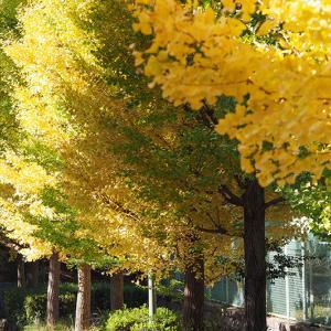 秋の深まりと我が家のカマキリ!!