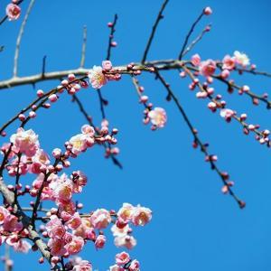 春を全身に感じる親子ランニング♪