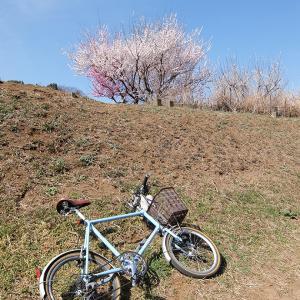 横浜の里山へ ウグイスが鳴き始めました♪