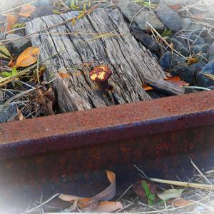 廃線の風景