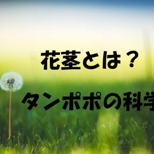 花茎とは?白い汁、ロゼットの葉、タンポポ笛から学ぶ植物の科学