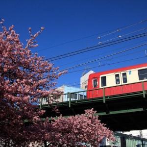 にわか撮り鉄と河津桜