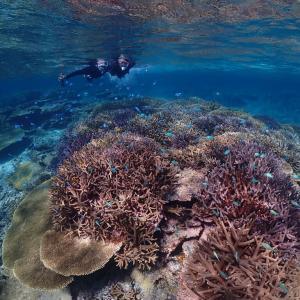 【宮古島】八重干瀬は絶対に行くべし!世界に誇る日本最大の珊瑚礁群です♪池間島 海美来の「紅芋もち」は絶品です!