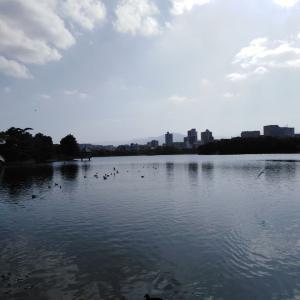 福岡市民の憩いの場所、大濠公園 フローズンヨーグルト美味しいです(^^) 長浜にも近いよ