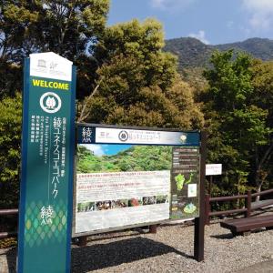 綾の照葉大吊橋の高さは142メートルもあります。