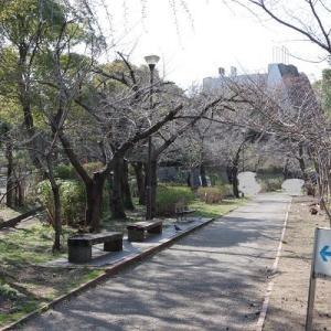 ~桜を撮る2020 その1~ 2020/03/19