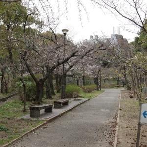 ~桜を撮る2020 その2~ 2020/03/26