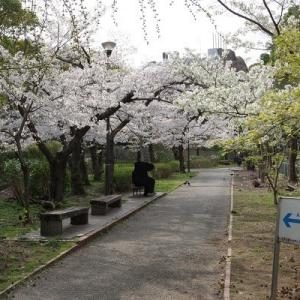 桜を撮る2020 その3 2020/04/03