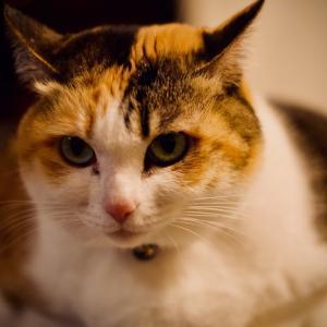 猫の日 令和2年2月22日、にゃんにゃんネットワークに感謝