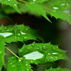 梅雨時の写真 瑞々しさ