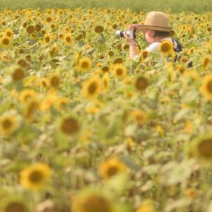 夏の証#4 向日葵、麦わら帽子