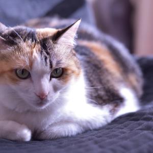 我が家の猫 9歳の誕生日