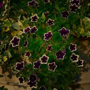 花のスナップ