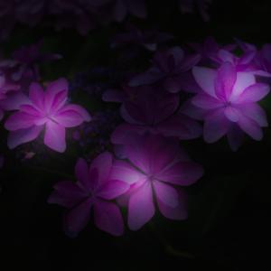紫陽花#5 ちょっと画像編集