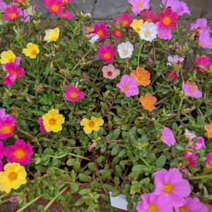 花はイイね