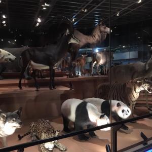 国立科学博物館① 地球館
