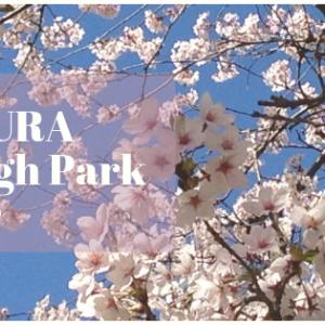 春です!SAKURAを見にいこう!トロントでお花見!