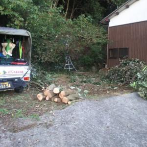 切り分けた枝を、一輪車で所定の所まで運べば、