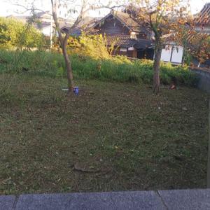 草刈機で、バリバリっと