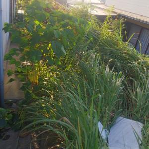 お庭の雑草も伸び放題。