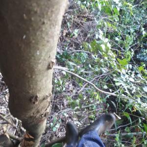 高い木の上に登り、