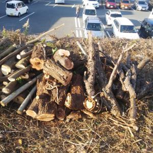 切り倒した樹木の枝木で、