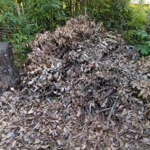 庭の片隅にかためていた枝木の残りを積んで、