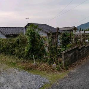 数日かかったこちらのお宅のお庭、庭木や竹が