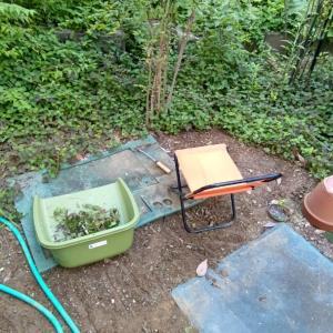 お庭の奥の、どくだみ草が群生している一角が