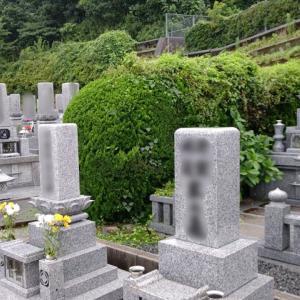 お墓とお墓の伸び放題の植え込みを剪定しますが、