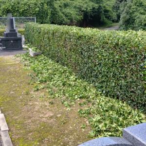 垣根の剪定と片付けが終わったところで、土砂降りの雨が